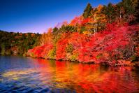 日本 長野県 白駒池