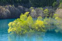 秋田県 宝仙湖の水没林