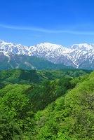 長野県 白馬村 初夏の北アルプスの山並み
