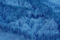 神奈川県 雪山