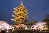 京都府 東寺の夜桜