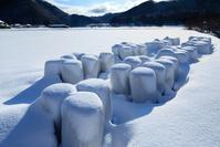 広島県 雪原に並ぶ稲わらロール