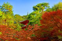 京都府 京都市 秋の今熊野観音寺 多宝塔
