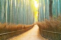 京都府 竹林の小径