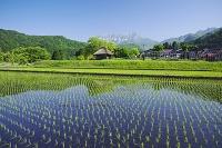 鳥取県 大山と水田と茅葺小屋