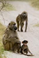 モレミ動物保護区