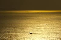 夕焼けの光る海