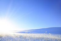 長野県 朝日差す霧ケ峰高原の雪景色