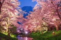 日本 山梨県 忍野村から富士山と夜桜