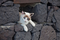 壁の隙間から顔を出す猫