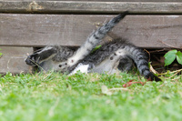 庭の柵の隙間をくぐる子猫