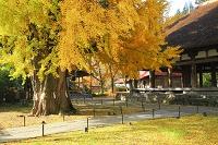 福島県 喜多方市 熊野神社・長床とイチョウ