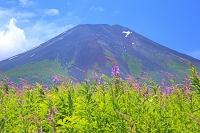 山梨県 梨ヶ原 富士山とヤナギラン