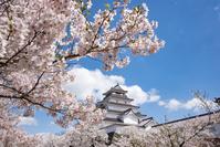 日本 福島県 鶴ヶ城の桜