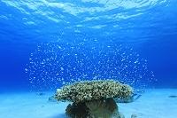 海中 サンゴ礁