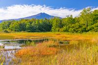 秋田県 桑ノ木台湿原から鳥海山