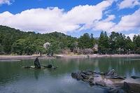 岩手県 毛越寺の出島石組みと池中立石