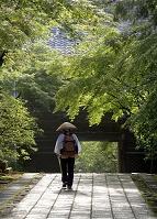 高知県 四国霊場第31番 竹林寺 新緑の中を歩くお遍路さん