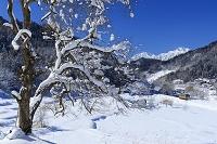 長野県 雪の大糸線