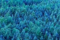 山梨県 針葉樹の森