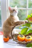 窓辺の柿と猫