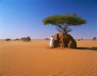スーダン サハラ砂漠 アリ塚