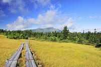 群馬県 尾瀬 鳩待ち通り 横田代の草紅葉と至仏山