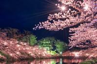 新潟県 高田城の夜桜