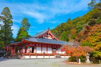 大阪府 紅葉の観心寺 金堂