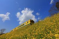 千葉県 いすみ鉄道と菜の花 上総中川付近