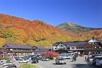 青森県 八甲田山 酸ヶ湯温泉の紅葉