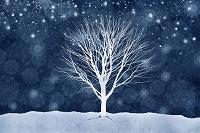 雪降る冬の夜と一本の木