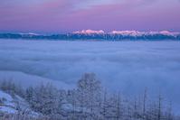 長野県 霧氷の林と雲海と北アルプス