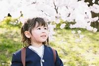 桜を見つめる幼稚園児