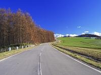 北海道 十勝岳連峰とカラマツと道