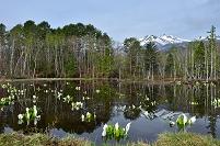 長野県 どじょう池より乗鞍岳と水芭蕉と水面の逆さ乗鞍岳