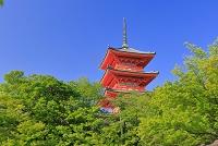 京都府 新緑の清水寺