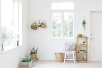 植物が飾られた部屋