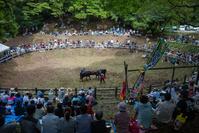 隠岐の島 牛突き