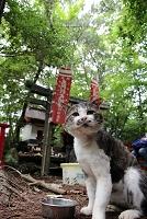田代島の猫神社