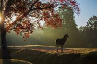紅葉した奈良公園と鹿
