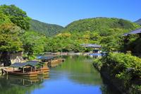京都府 新緑の嵐山と桂川支流の屋形船