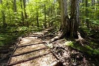 長野県 赤沢自然休養林のセラピーロード