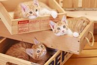 木箱に入って遊ぶ3匹のネコ