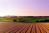 北海道 初夏の丘の夕景
