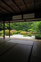 京都府 詩仙堂 至楽巣から見るサツキ咲く新緑の庭園