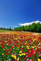 北海道 滝野スズラン丘陵公園