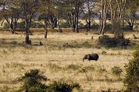 タンザニア リフトバレー ゾウ