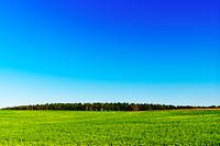 北海道 なだらかな緑の丘と青空