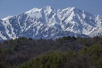 長野県 早春の爺ヶ岳